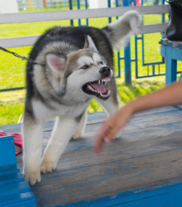 New Jersey Dog Bite Attorney